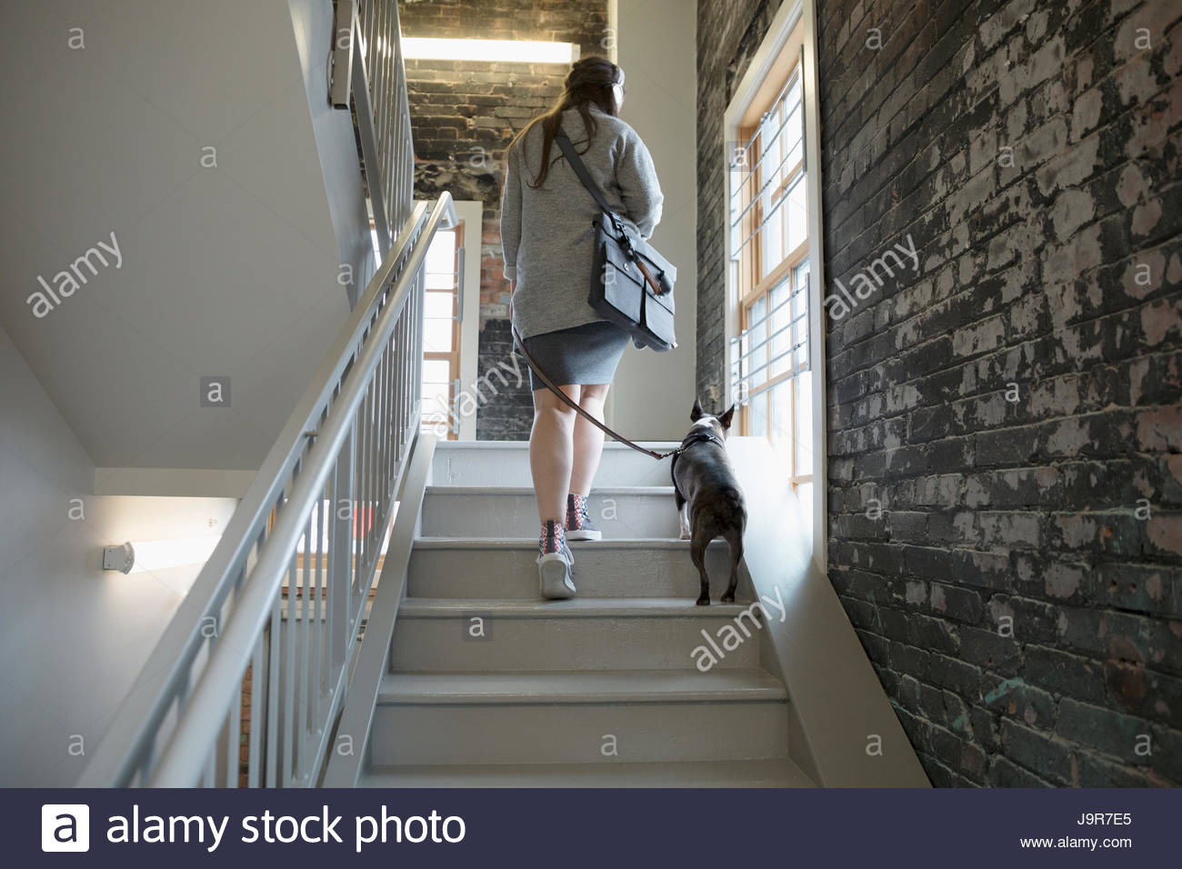 Creative businesswoman walking with dog on leash up office stairs - Stock Image