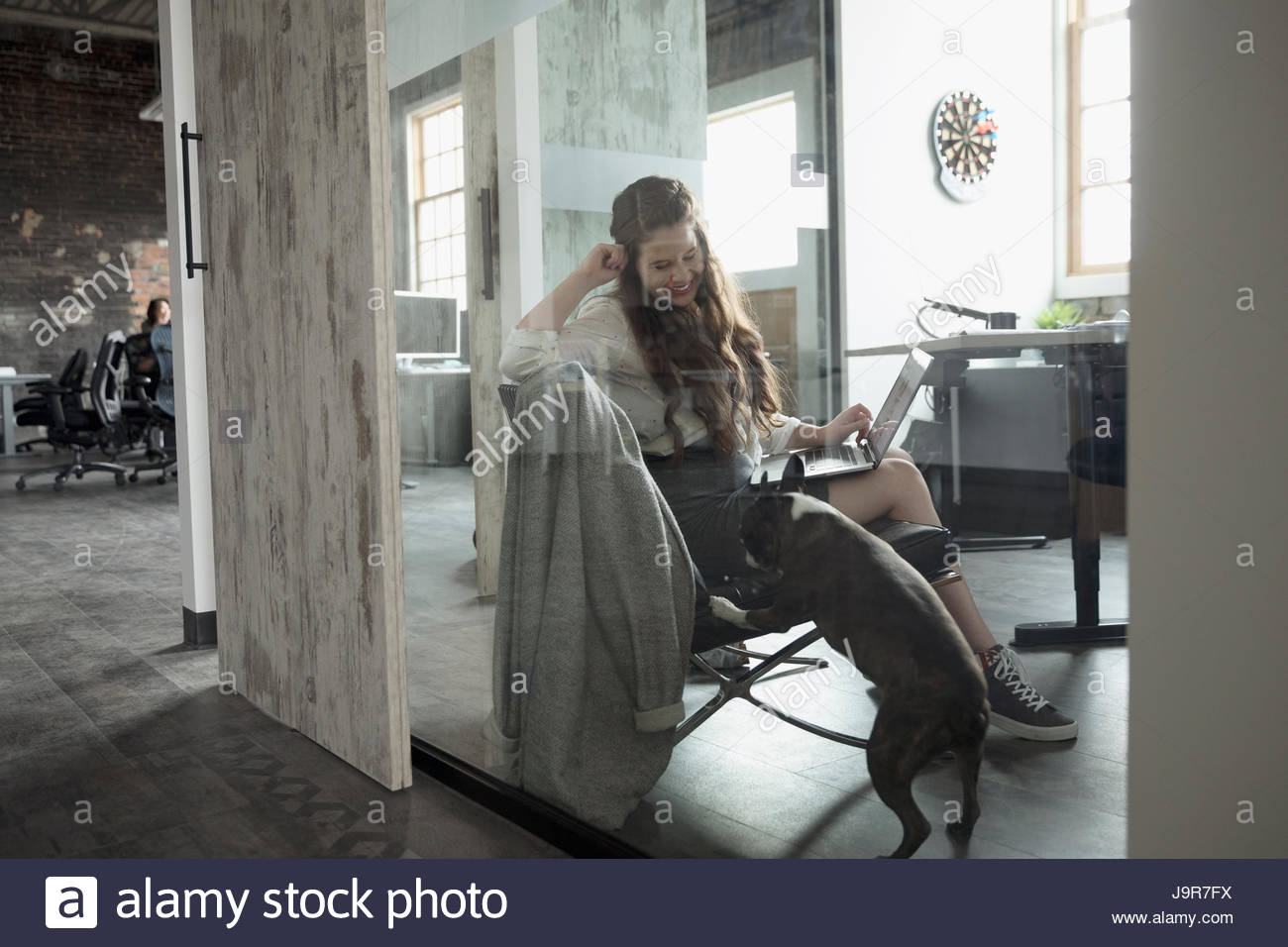 Creative businesswoman with laptop watching dog in office - Stock Image