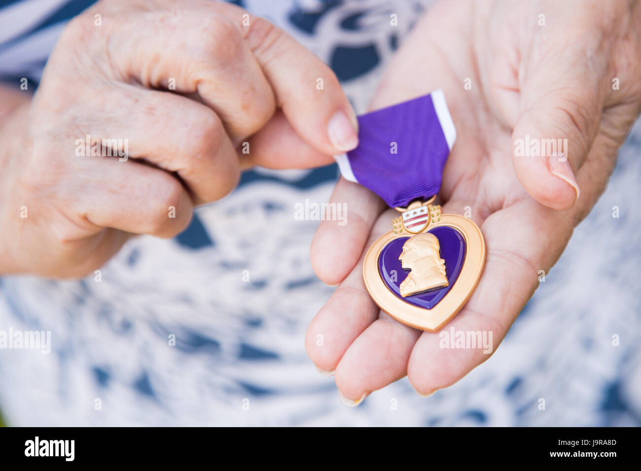 Senior Woman Holding The Military Purple Heart Medal In Her Hands. - Stock Image