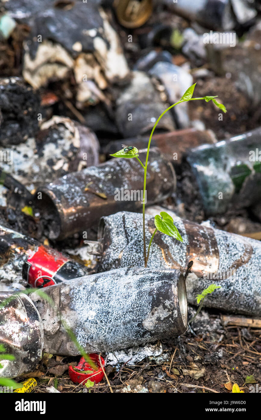 Discarded glass bottles and beer cans burnt in a fly tip. - Stock Image