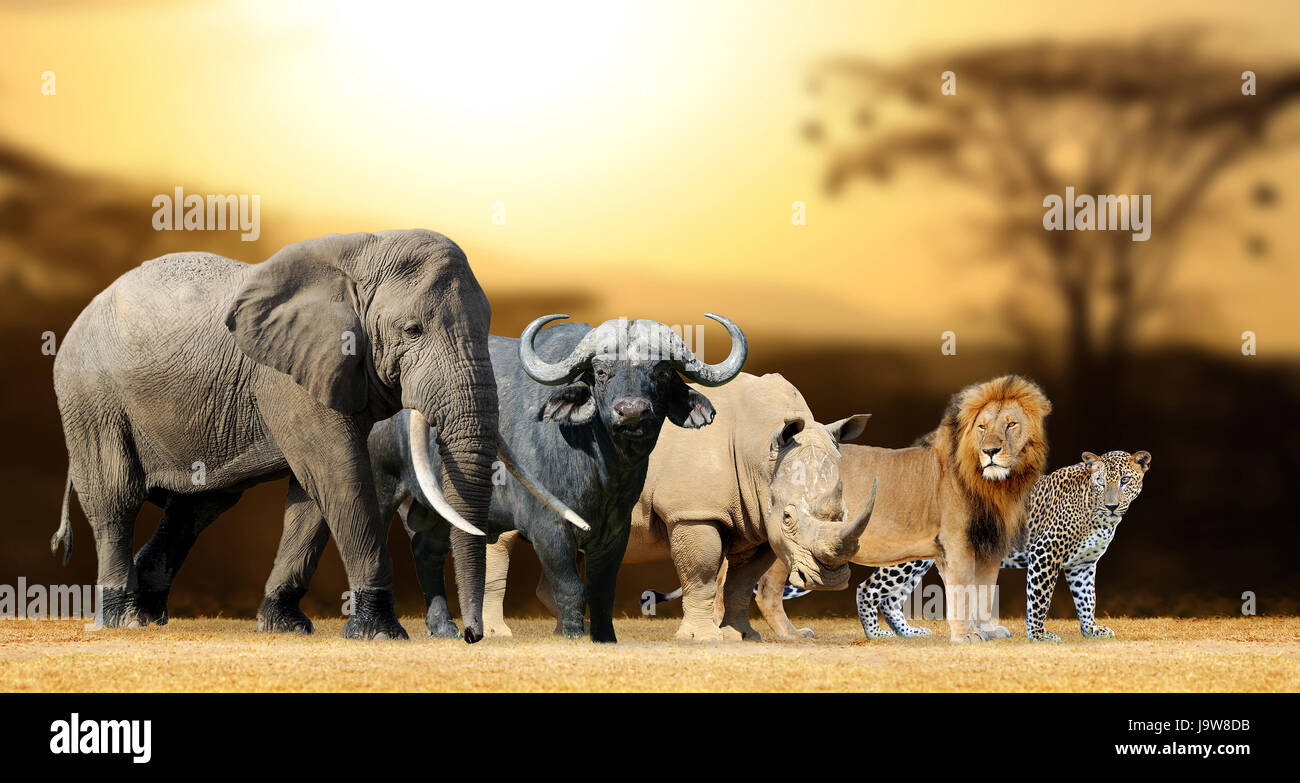 Animals Black And White Elephants 10000 Lions Big Cats: Lion, Elephant, Leopard, Buffalo And