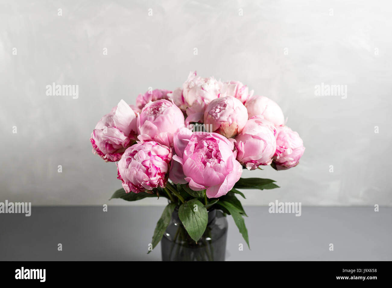 Pink peony flower on a gray background.copy space Stock Photo