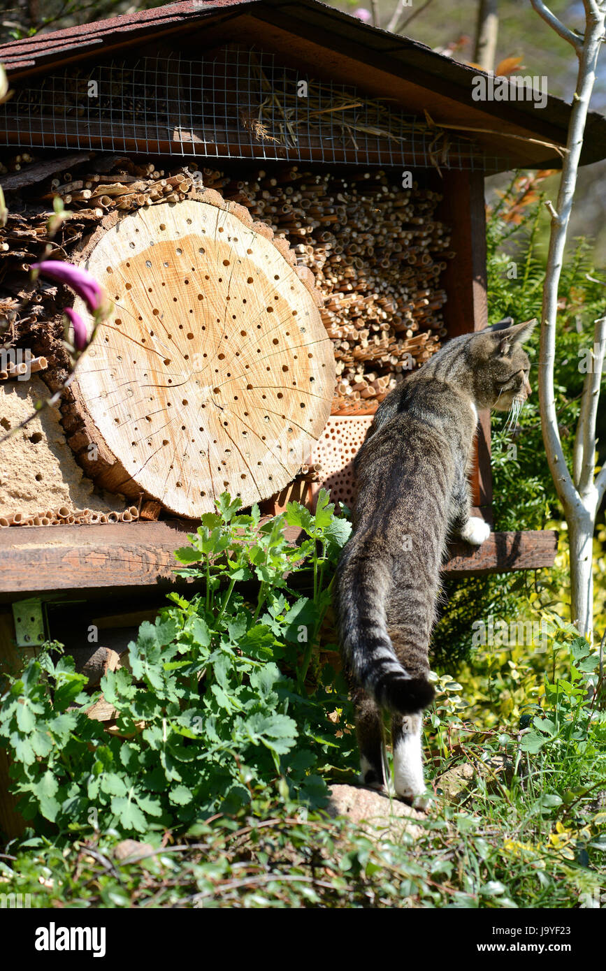 grey young cat looking on insect hotel for wild bees. - Stock Image