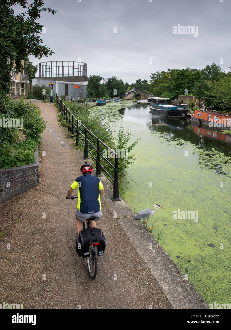 London, England - July 15, 2016: A cyclist passes a heron on the Grand Union Canal towpath at Ladbroke Grove in Stock Photo