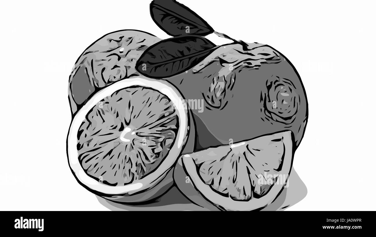 a monochrome illustration of whole and sliced oranges with leaves on white background. - Stock Image