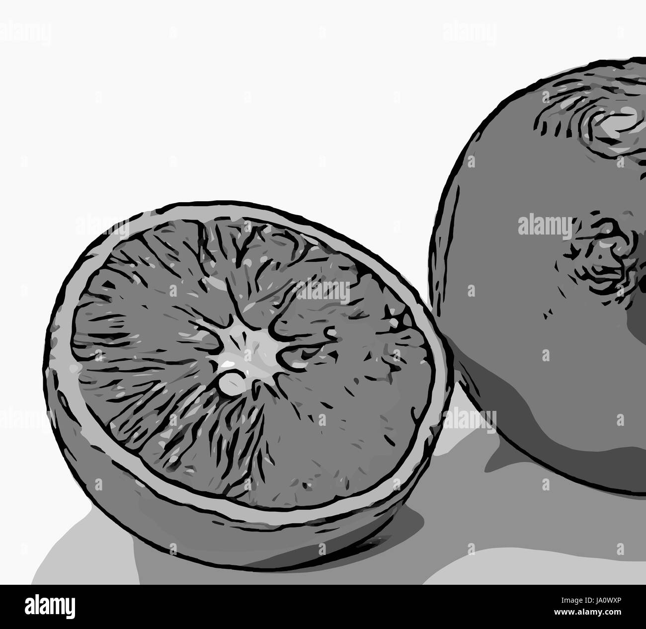 monochrome illustration of whole and sliced oranges on white background. - Stock Image