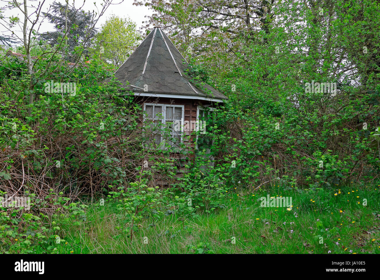 Small Gazebo in a garden gradually succumbing to nature as weeds and foliage overgrow the Gazebo and further dilapidate - Stock Image