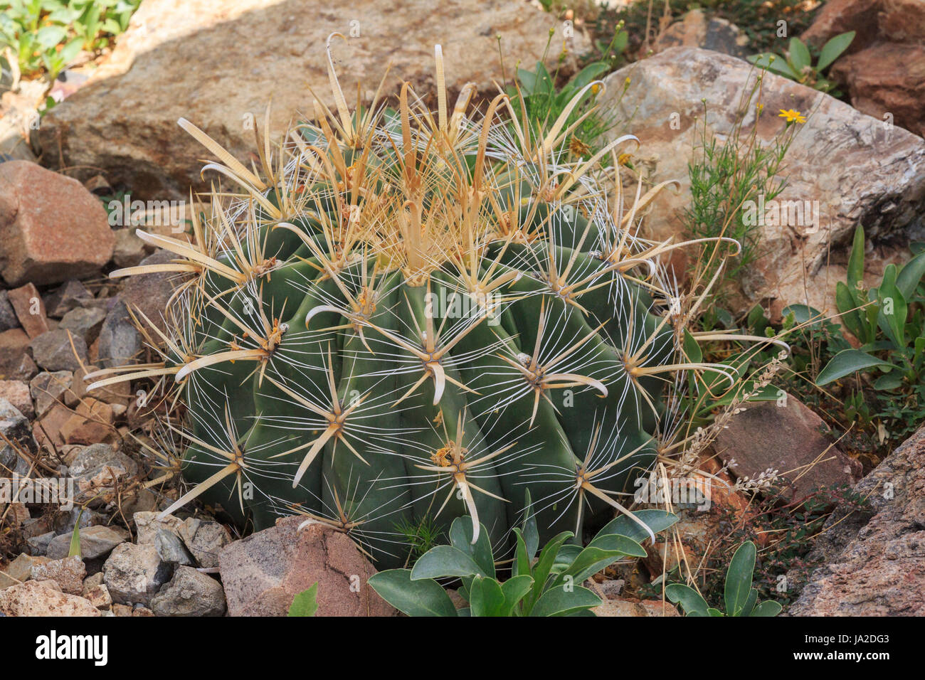 Cactus Plants In A Desert Garden Stock Photo 143884051 Alamy