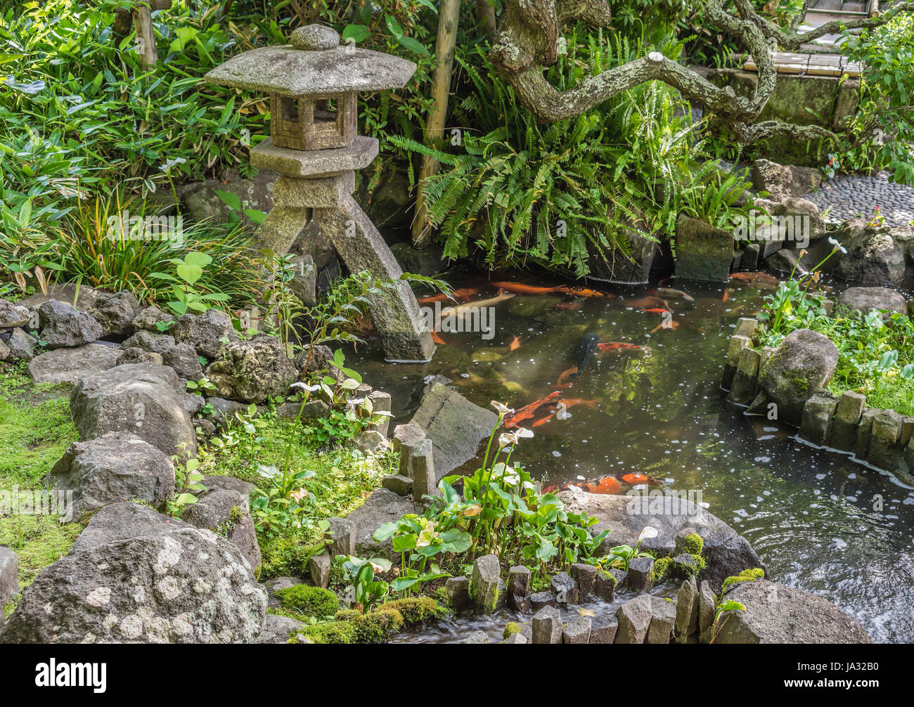 Koi pond at the garden of the Hase-dera temple, commonly called the Hase-kannon, one of the Buddhist temples in - Stock Image