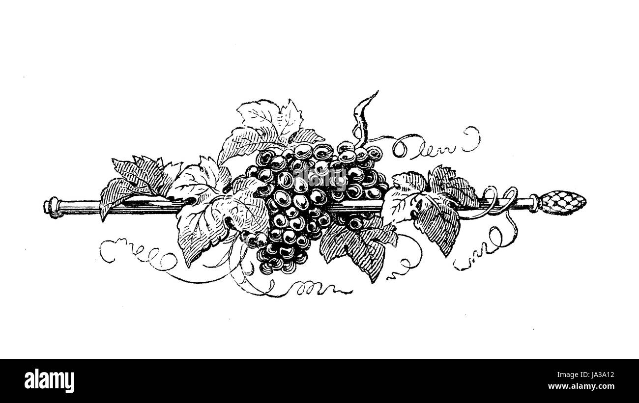 Typographic decorative staff with grapes and vine leaves, vintage engraving - Stock Image
