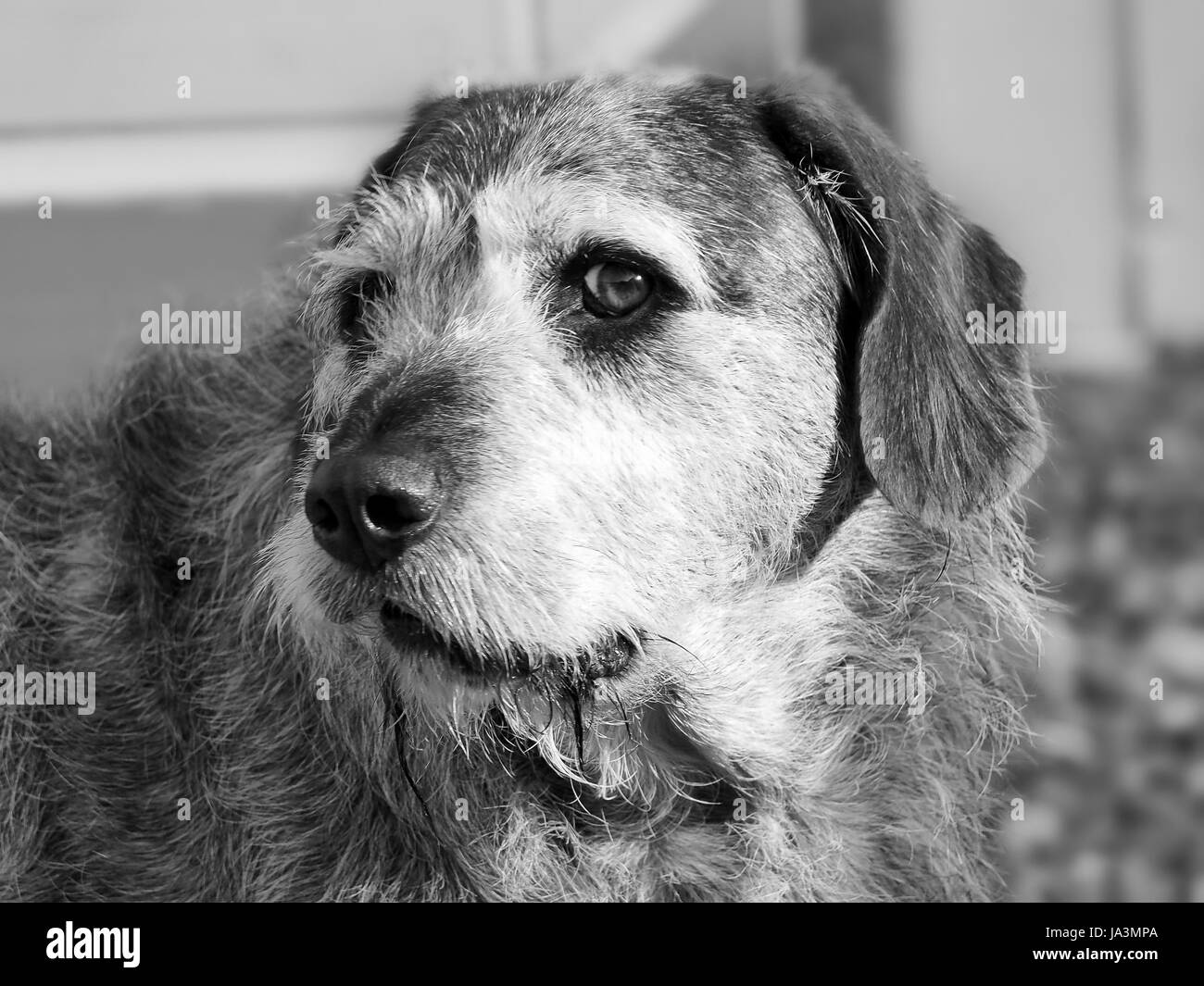 Dog Looking on the Sly - Stock Image