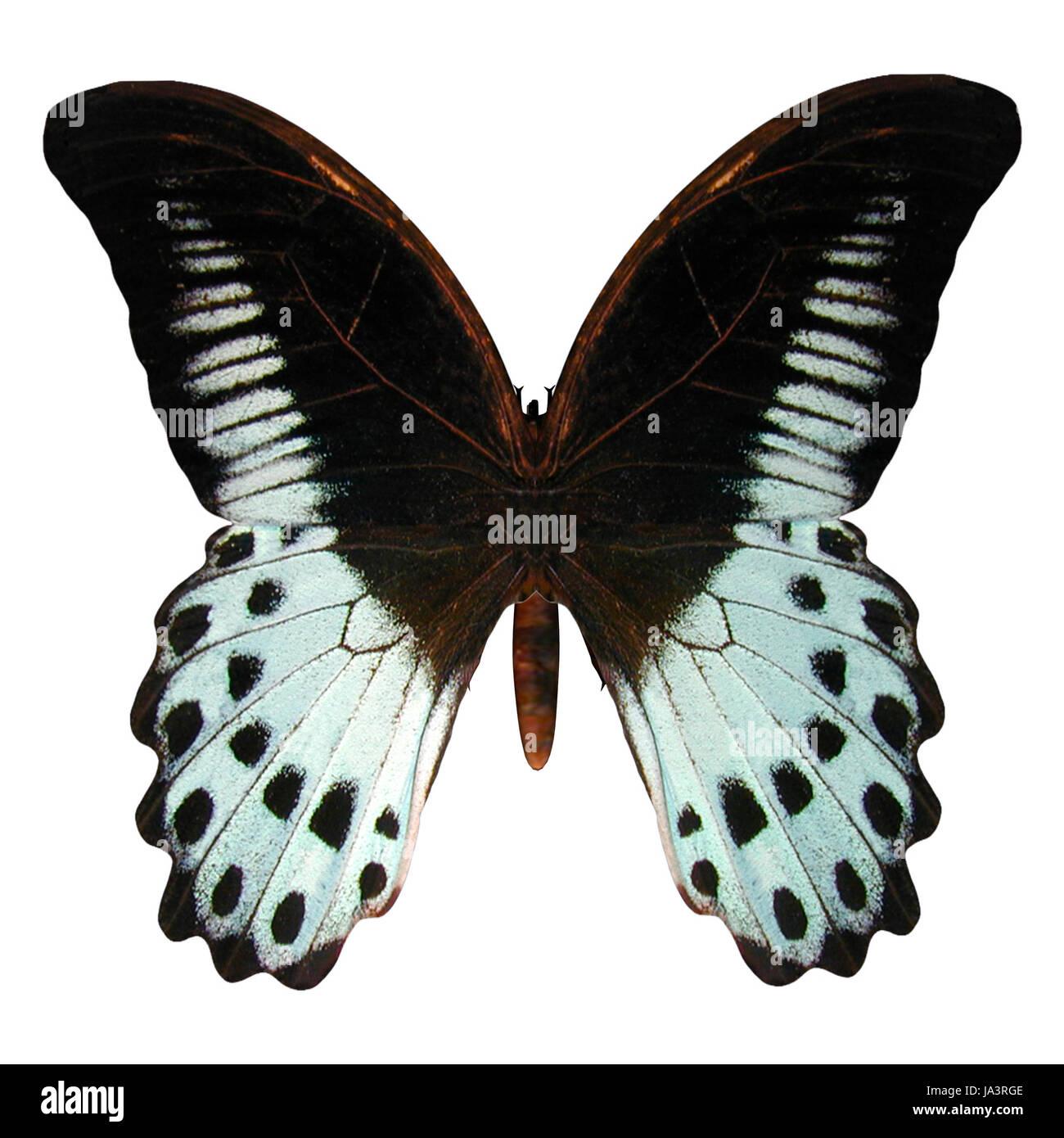 beautiful, beauteously, nice, single, isolated, closeup, flight, animal, Stock Photo