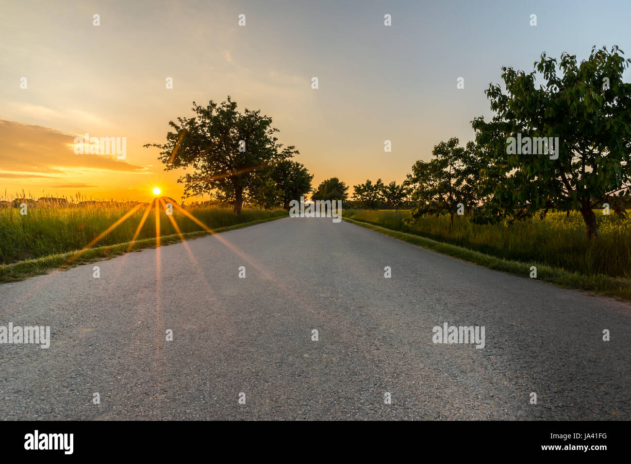 Horizontal Photo Of Country Road With Sunset In Background Grey Trees On Both Sides And Clear Blue Evening Sky Without Any Vehicles