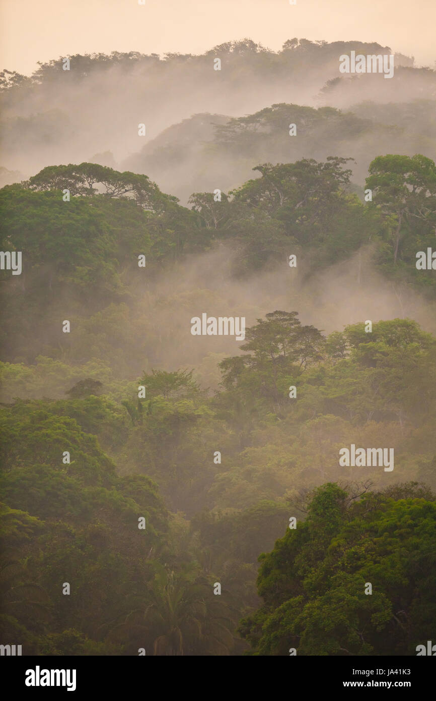 Soberania national park, Republic of Panama, 20th May, 2014. Misty rainforest after rainfall in Soberania national Stock Photo