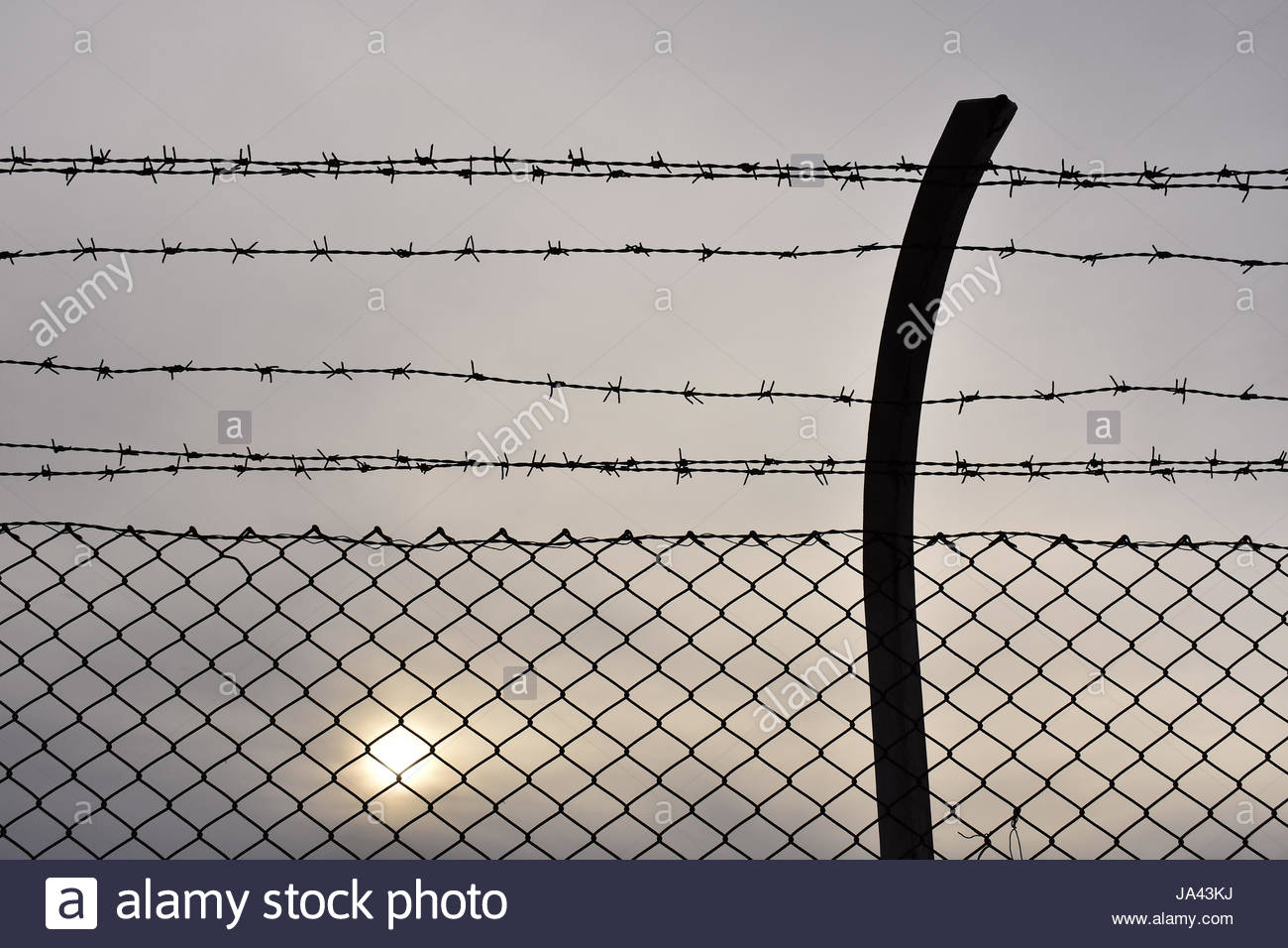 Barbed wire fence detail - Stock Image