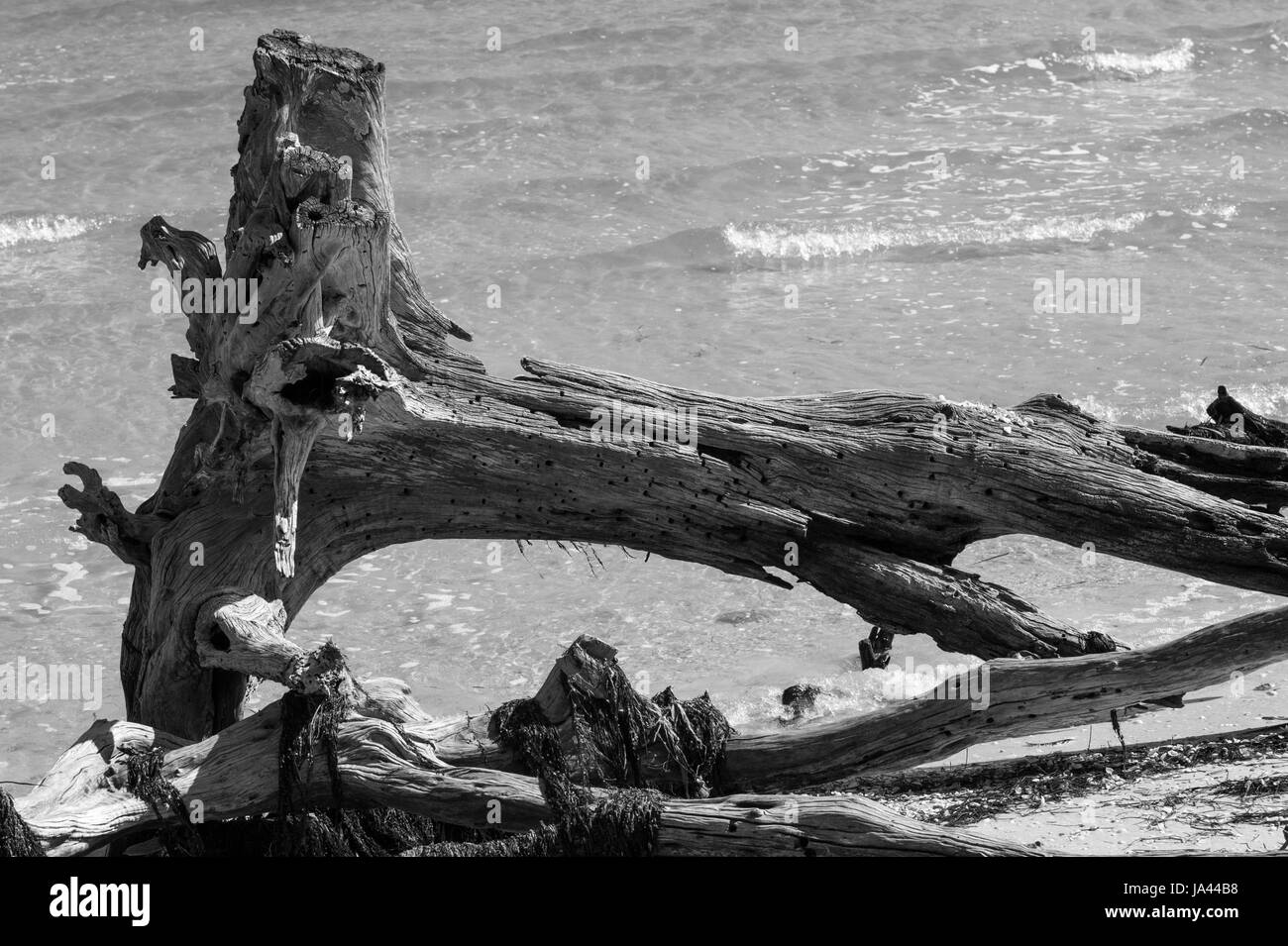Piece of dead wood on the beach - Stock Image