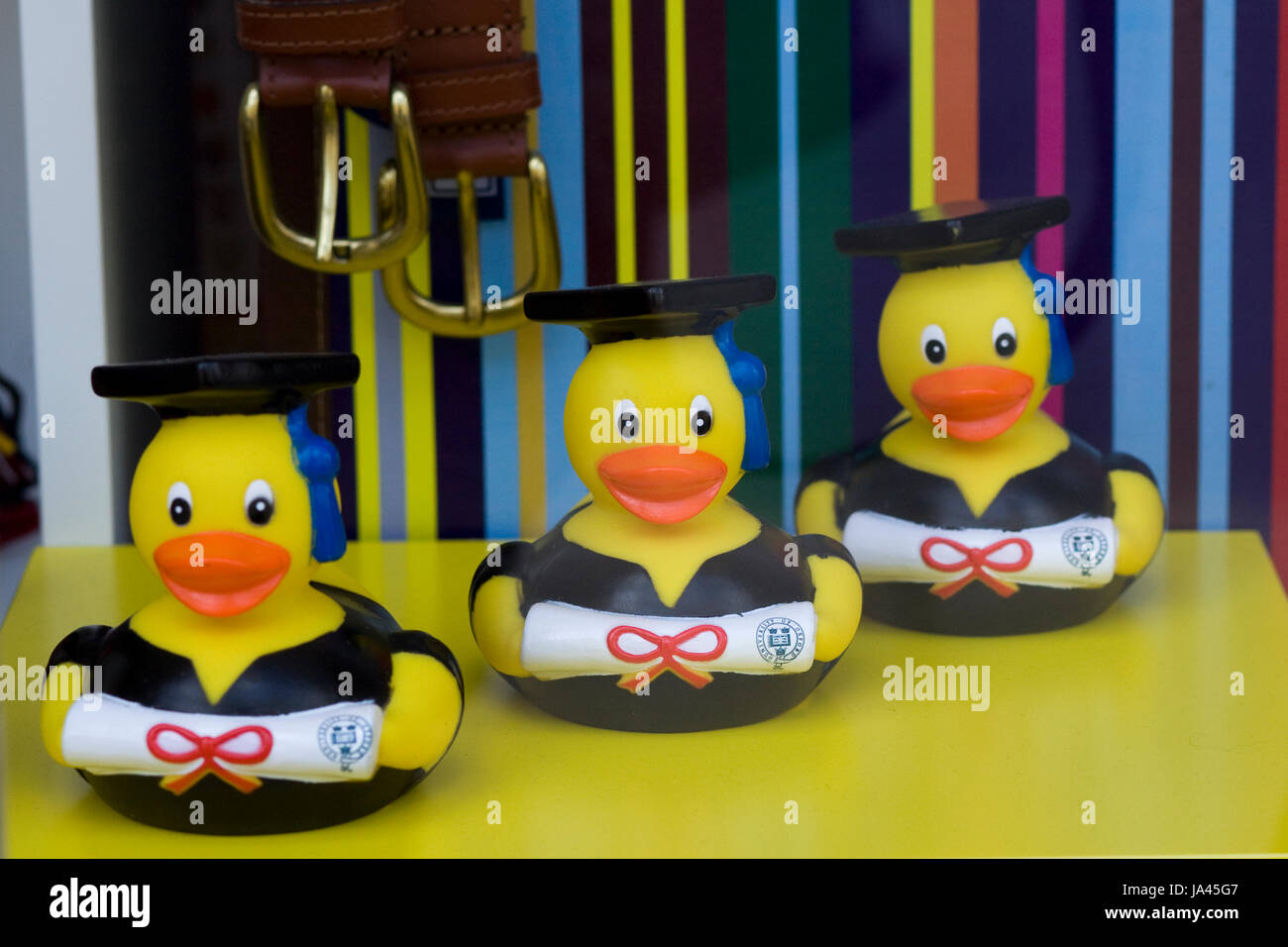 Rubber Ducks dressed in Black graduation gowns diplomas - Stock Image