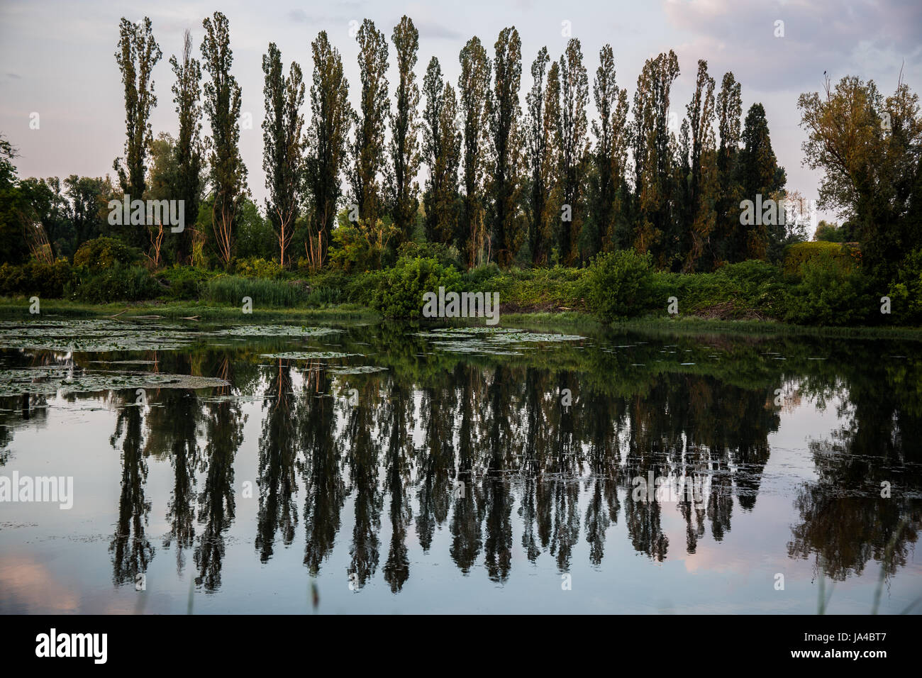 Trees in a row with beautiful reflections on the water - Stock Image