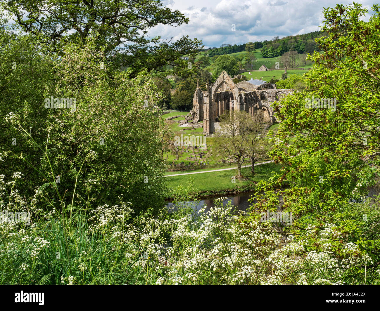 Bolton Priory Ruins in Spring from a Viewpoint across the River Wharfe Bolton Abbey North Yorkshire England - Stock Image