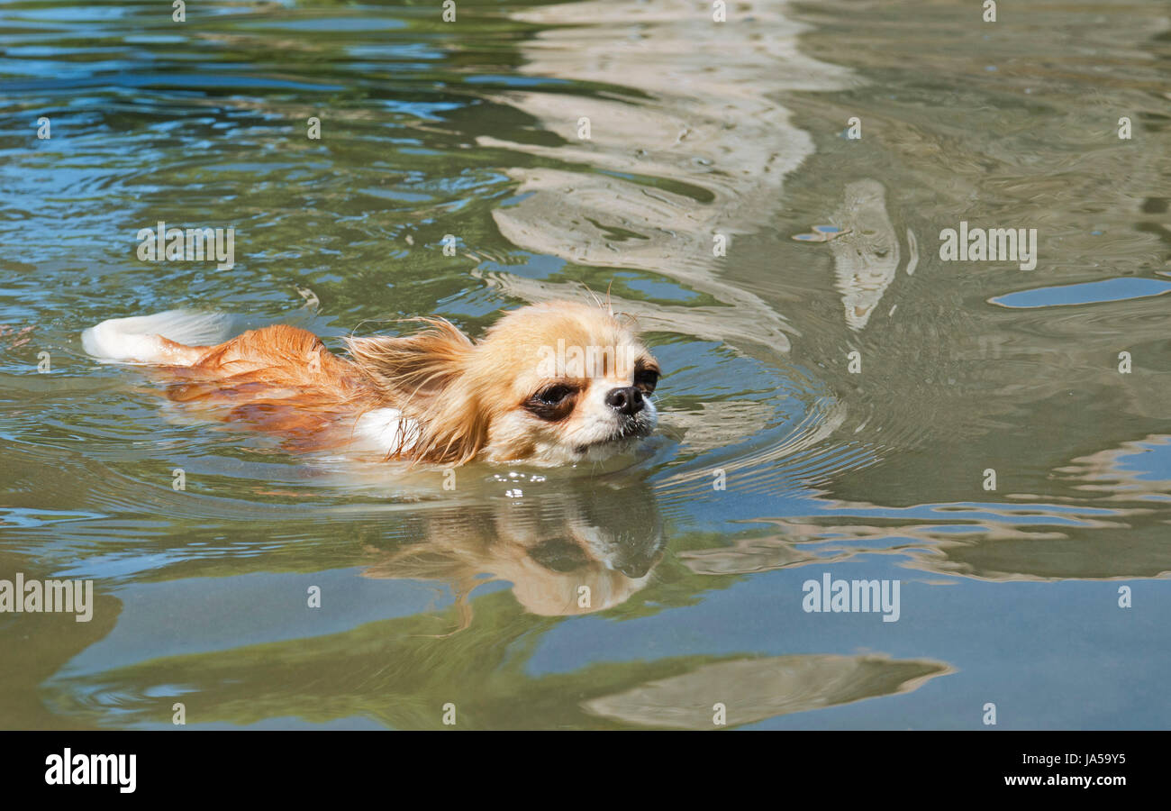 holiday, vacation, holidays, vacations, dog, puppy, salt water, sea, ocean, Stock Photo