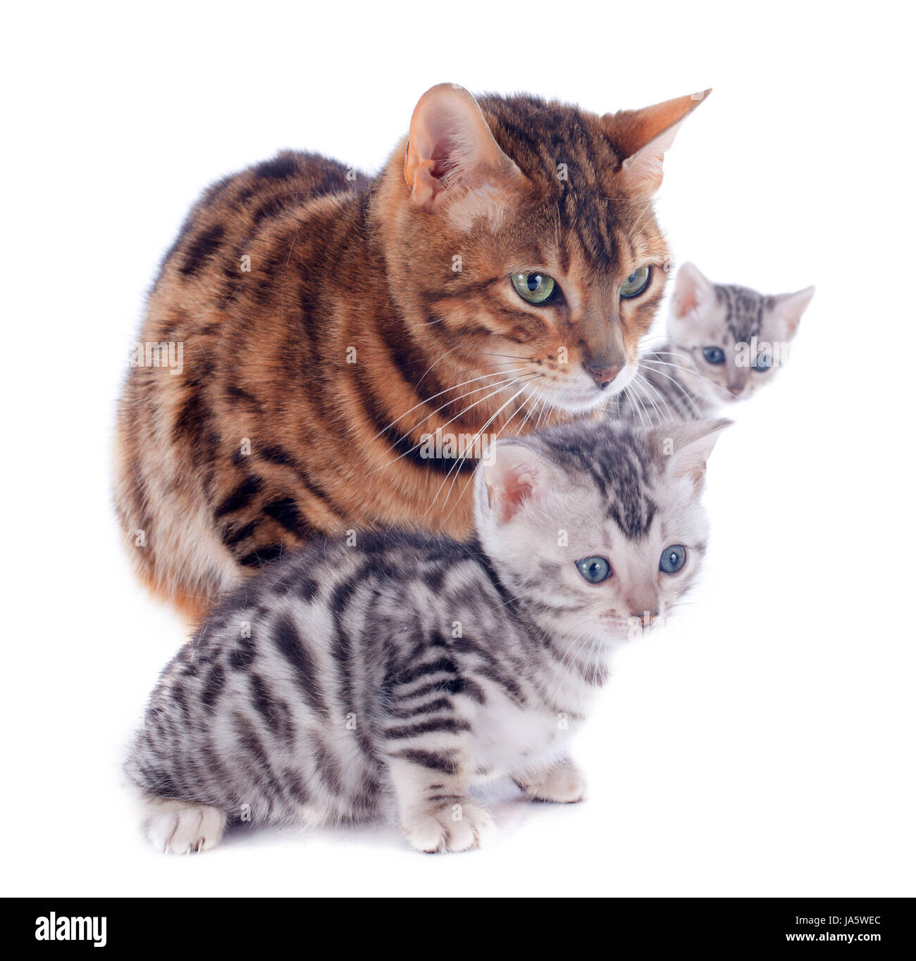cats three mother mom ma mommy cat baby kitten pussycat cat