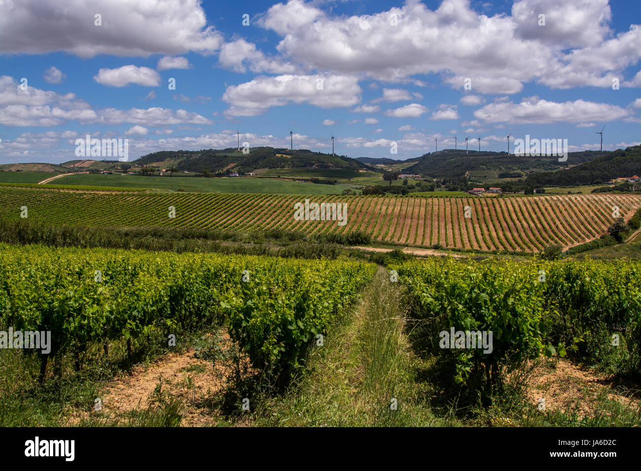 Torres Vedras Portugal. 18 May 2017.View of the vine fields inTorres Vedras.Torres Vedras, Portugal. photography - Stock Image