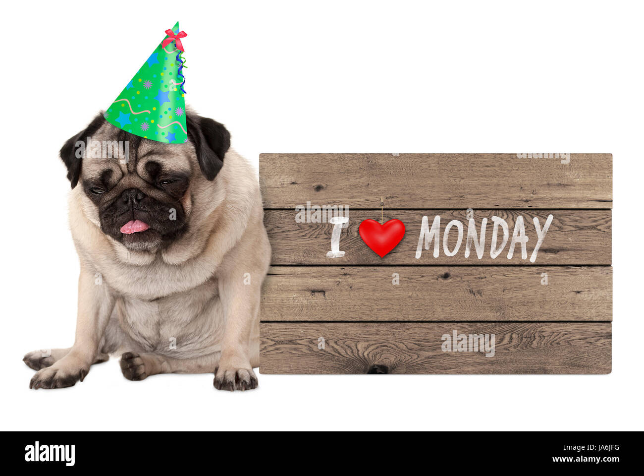 fed up pug puppy dog wearing party hat, sitting down next to wooden sign with text I love monday, isolated on white - Stock Image