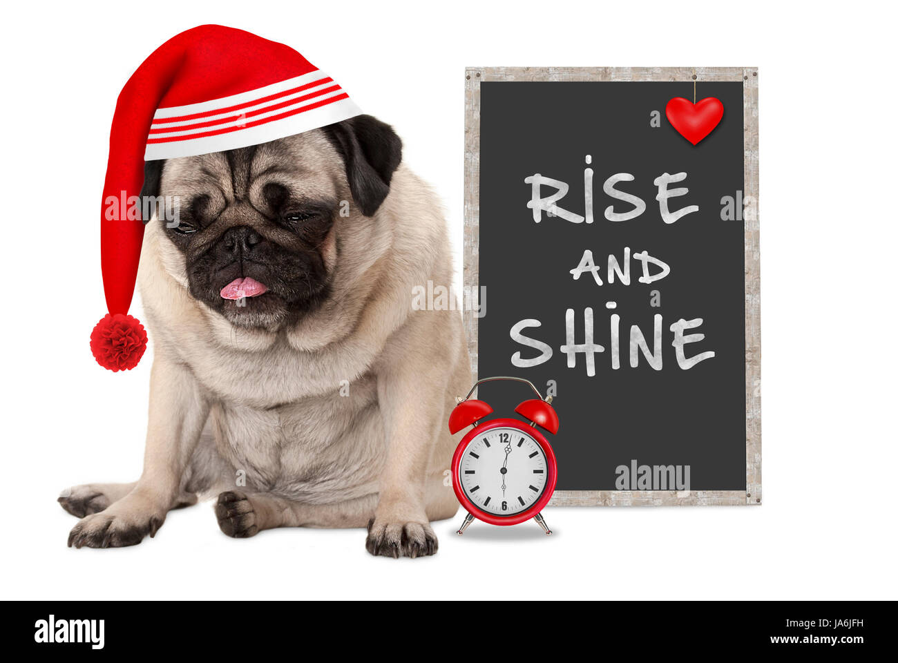 getting up in early morning, grumpy pug puppy dog with red sleeping cap, alarm clock and sign with text rise and - Stock Image
