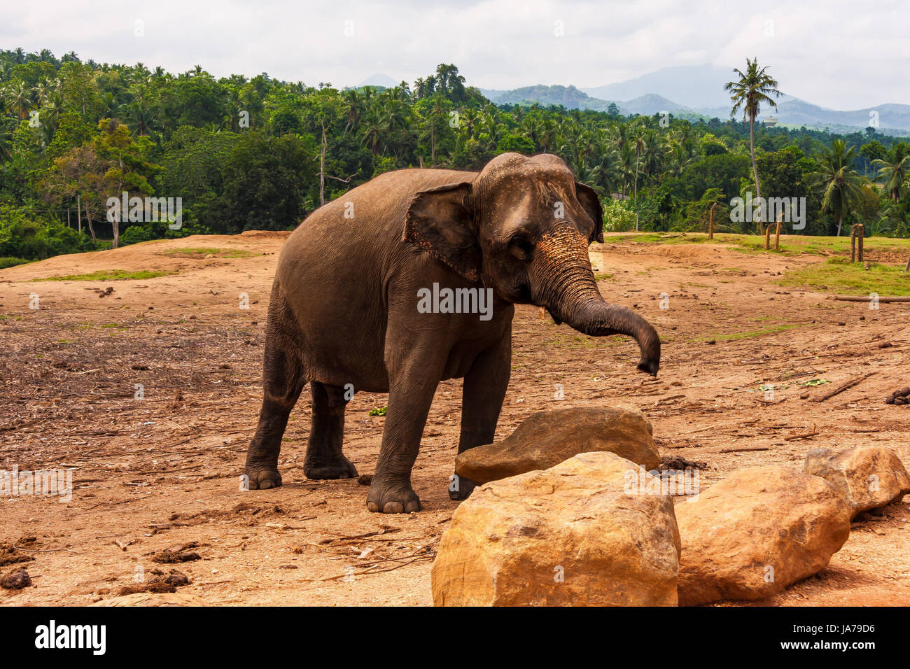 animal, elephant, conservation of nature, wildlife, nature, trunk, legs, - Stock Image