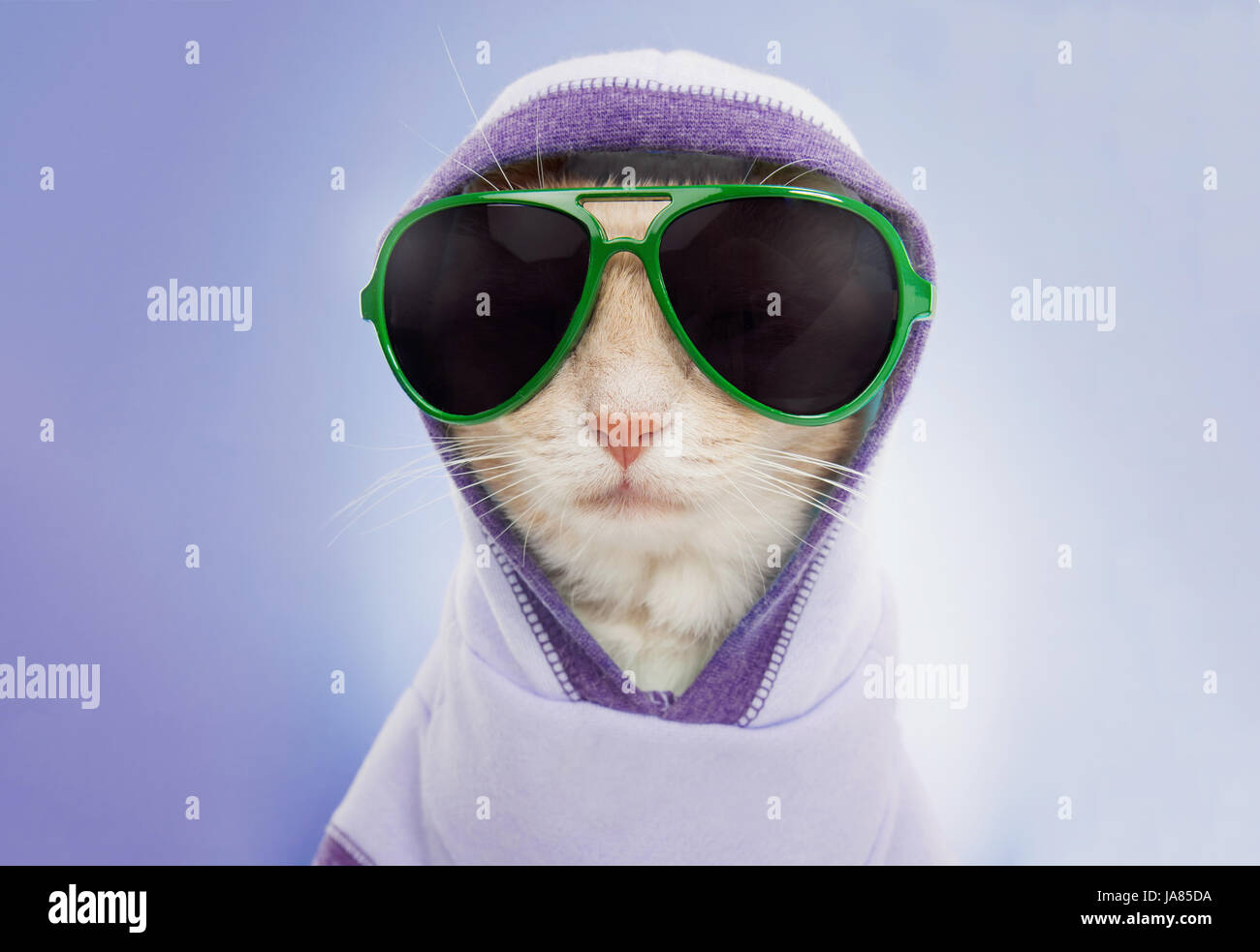 Studio portrait of cat wearing a hood and aviator sunglasses looking directly at camera. Stock Photo