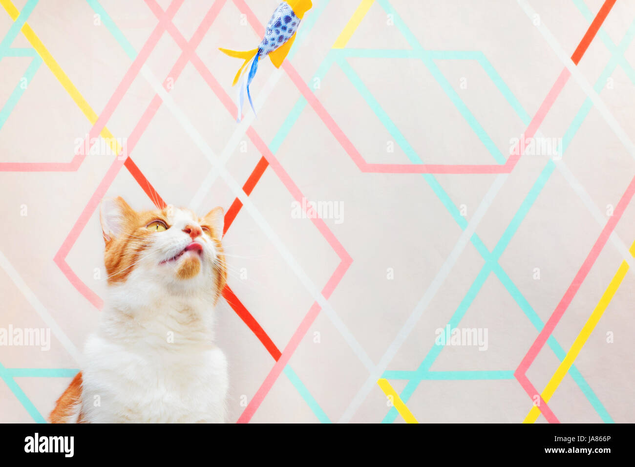 Colorful photograph of an orange and white cat looking upward and focusing on a cat toy overhead. Modern, geometric - Stock Image