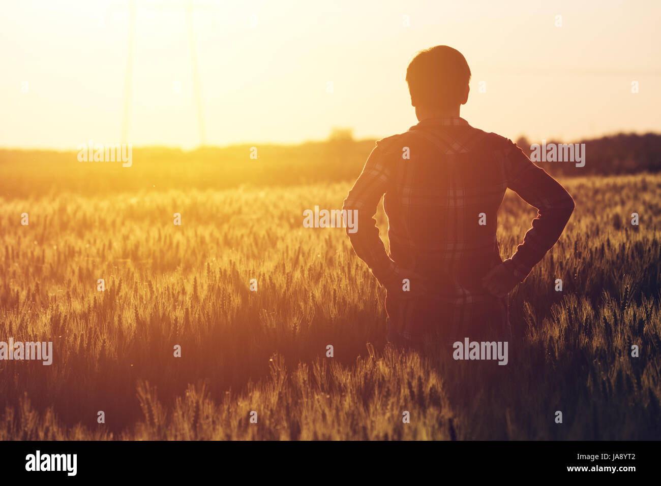 Concerned female agronomist standing in cultivated wheat crops field and looking to a beautiful sunset on the horizon - Stock Image