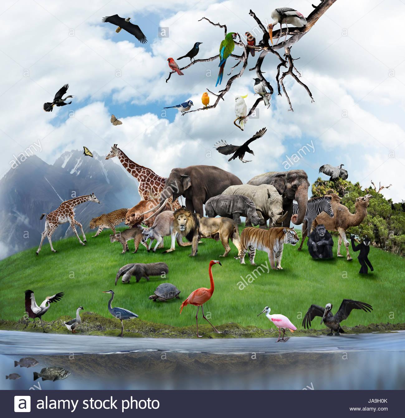80 Gambar Model Fauna Paling Keren