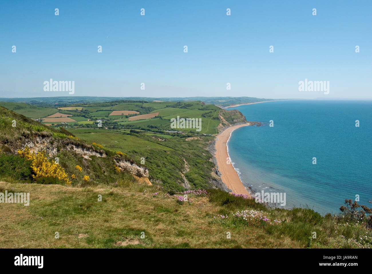 View from the top of Golden Cap, the highest peak on the south coast, looking east along the Jurassic Coast passed - Stock Image