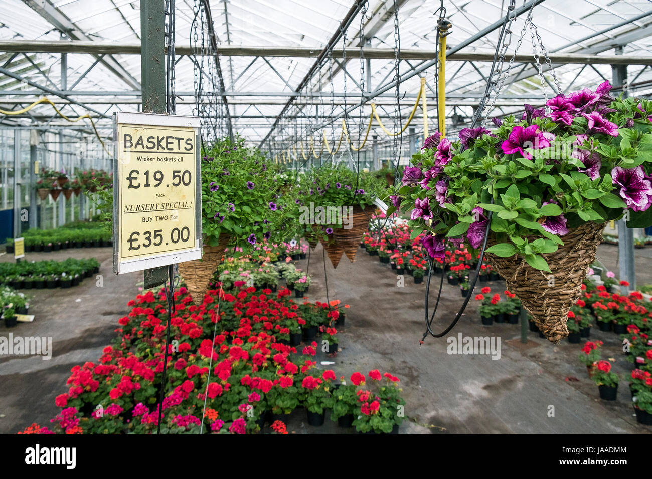 plants for sale in a garden centre and plant nursery stock photo