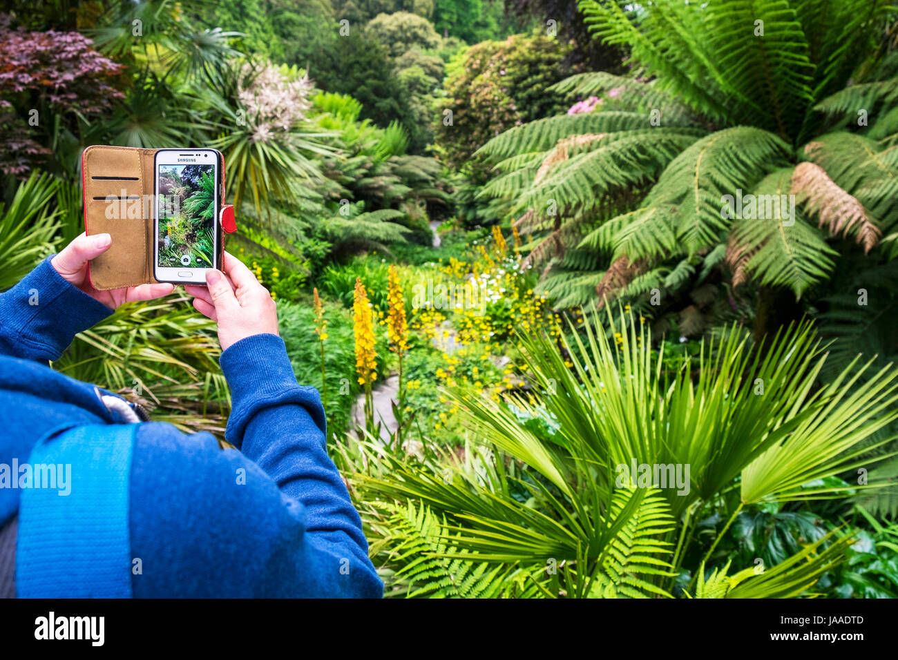 A visitor uses a Samsung mobile phone to photograph plants in Trebah Garden in Cornwall. - Stock Image