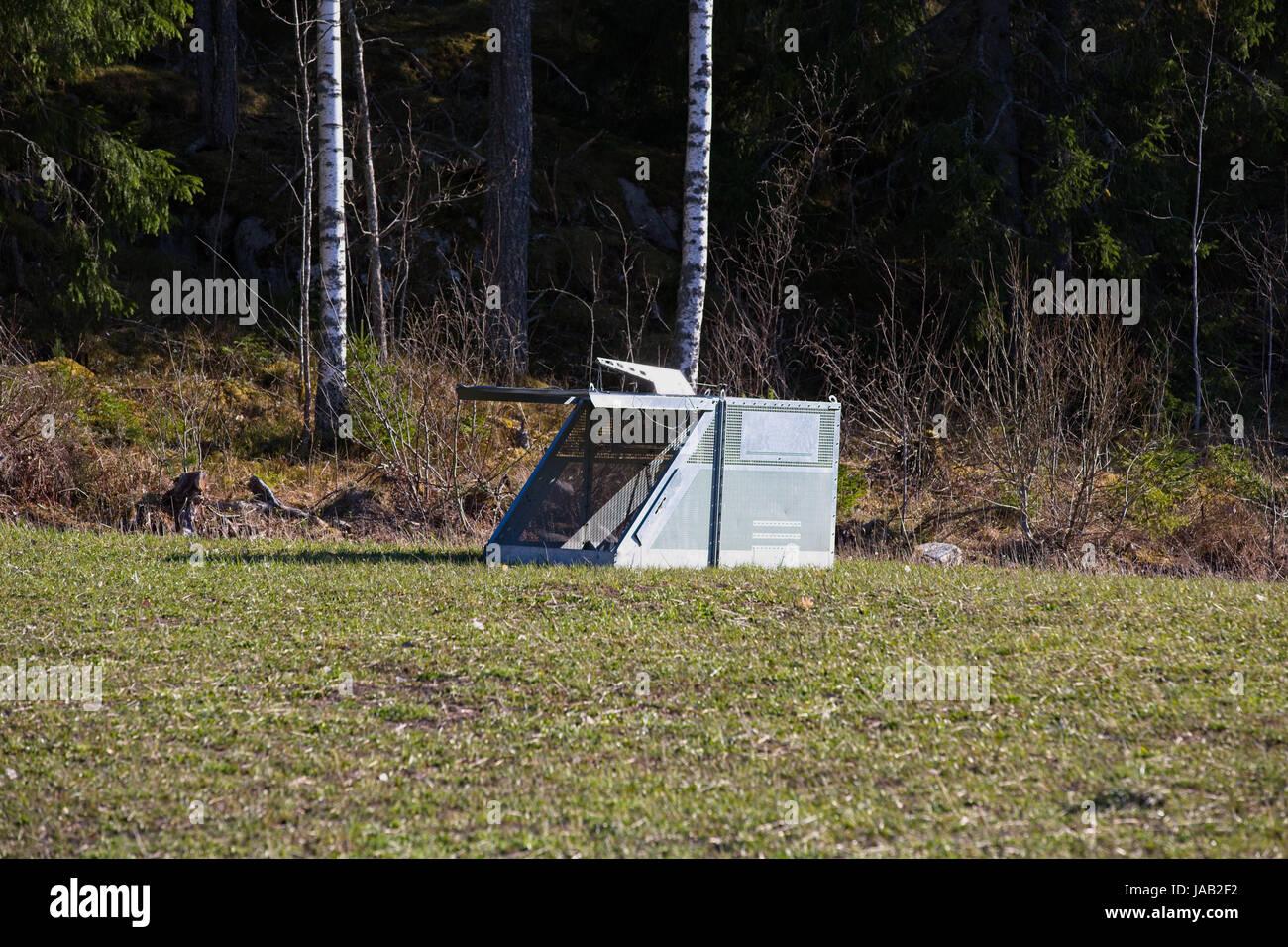 trap for wild boar stock photo 144072966 alamy