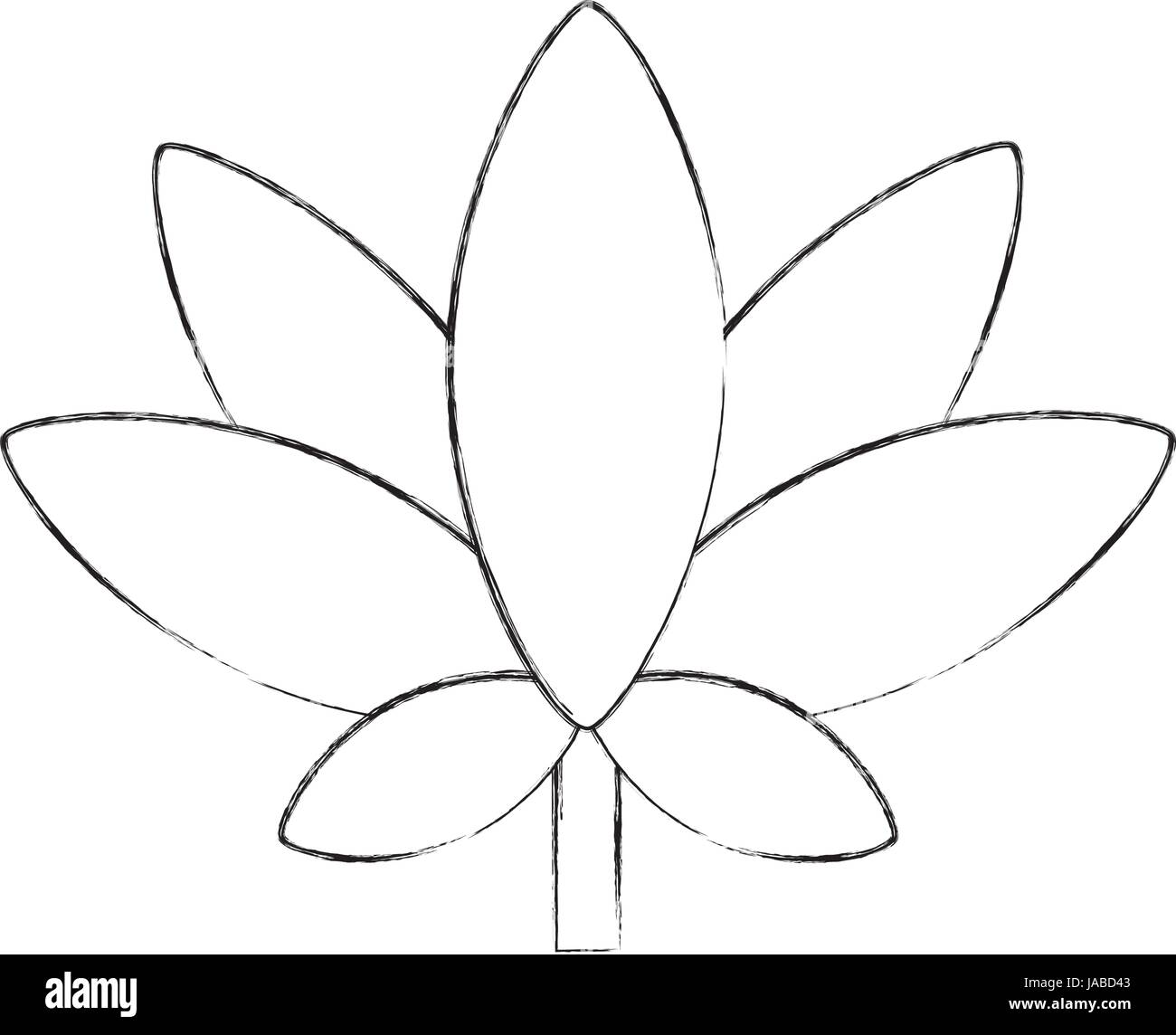 Henna Plant Black And White Stock Photos Images Alamy