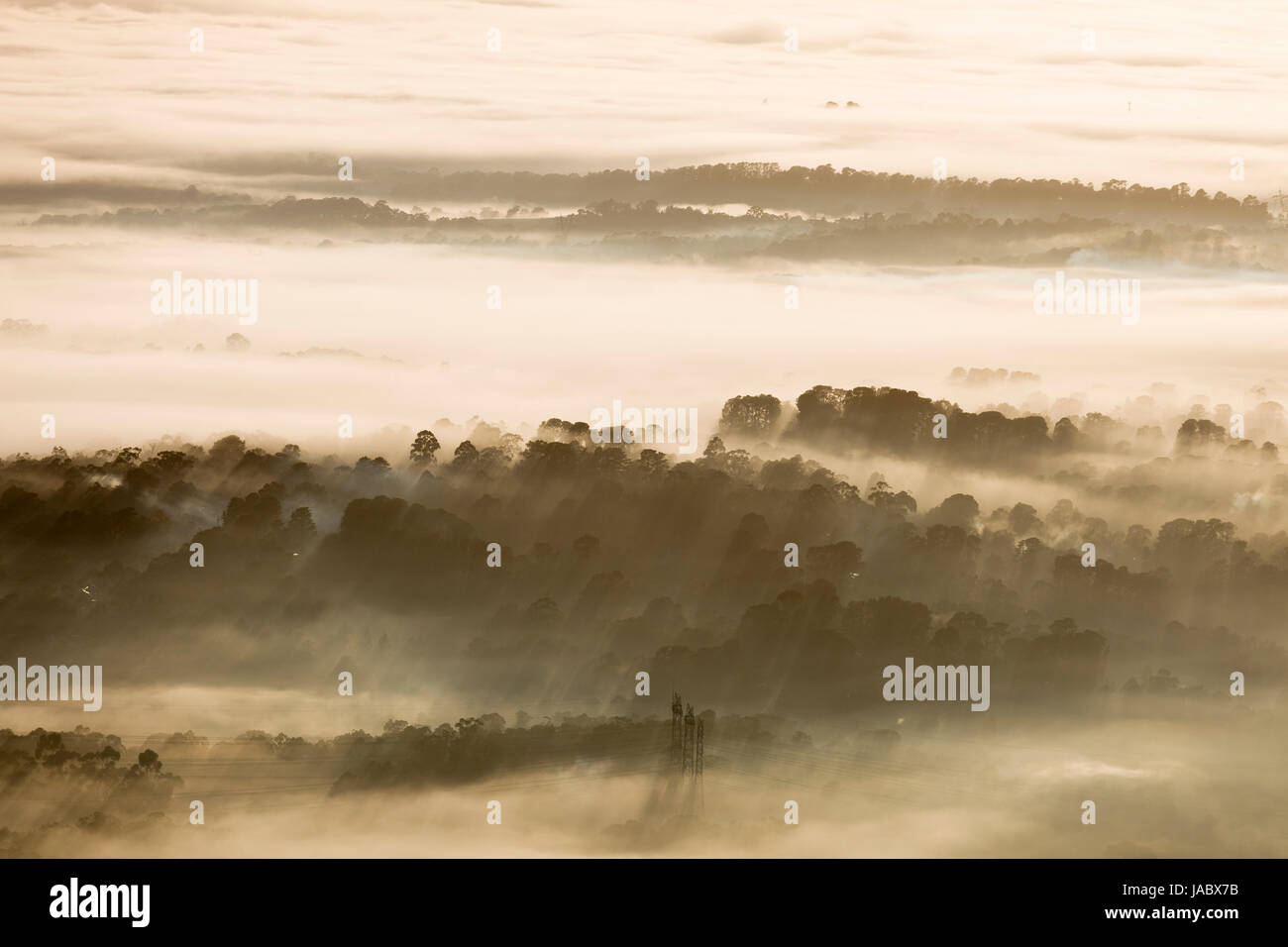 Natural landscape of forest with fogs in the morniing. - Stock Image