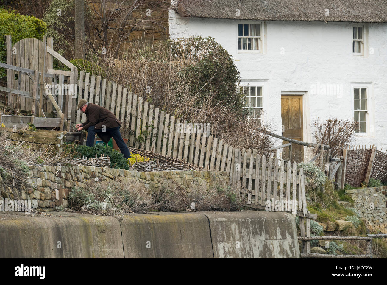 Man gardening in tiny terraced vegetable garden above harbour wall in coastal village, whitewashed thatched cottage Stock Photo