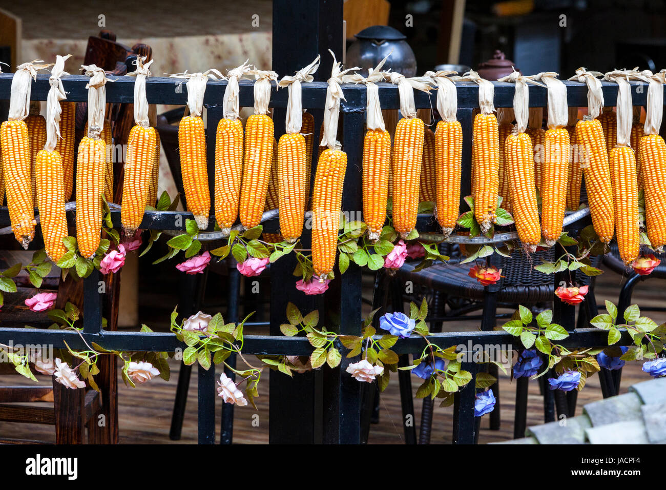 Longji, China.  Ears of Corn Hanging out to Dry. - Stock Image