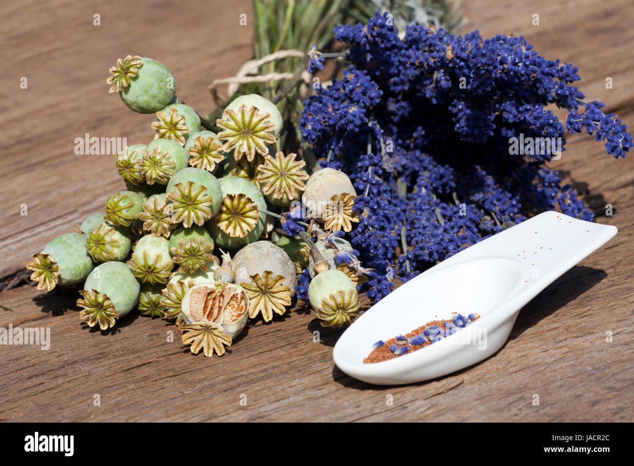Sommerernte von Lavendelblüten, Schlafmonkapseln und Mohnsamen in einer kleinen Porzellanschale auf einem rustikalem - Stock Image