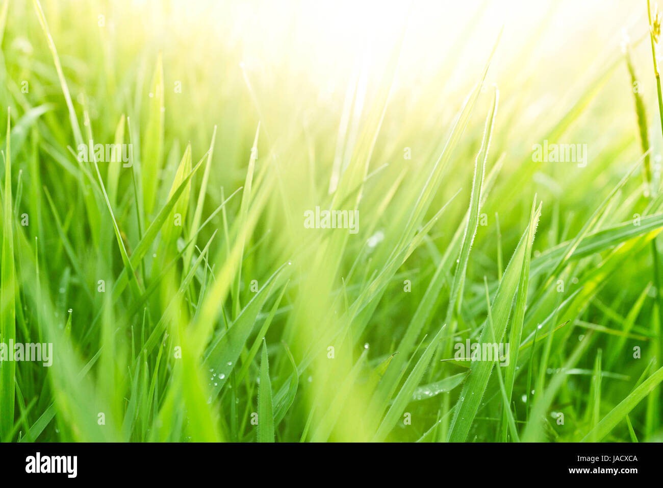 Green Grass Background Hd Images
