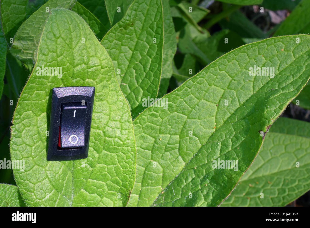 Leaf with inserted power switch turned to position on. Unique conservation and green business concept. - Stock Image