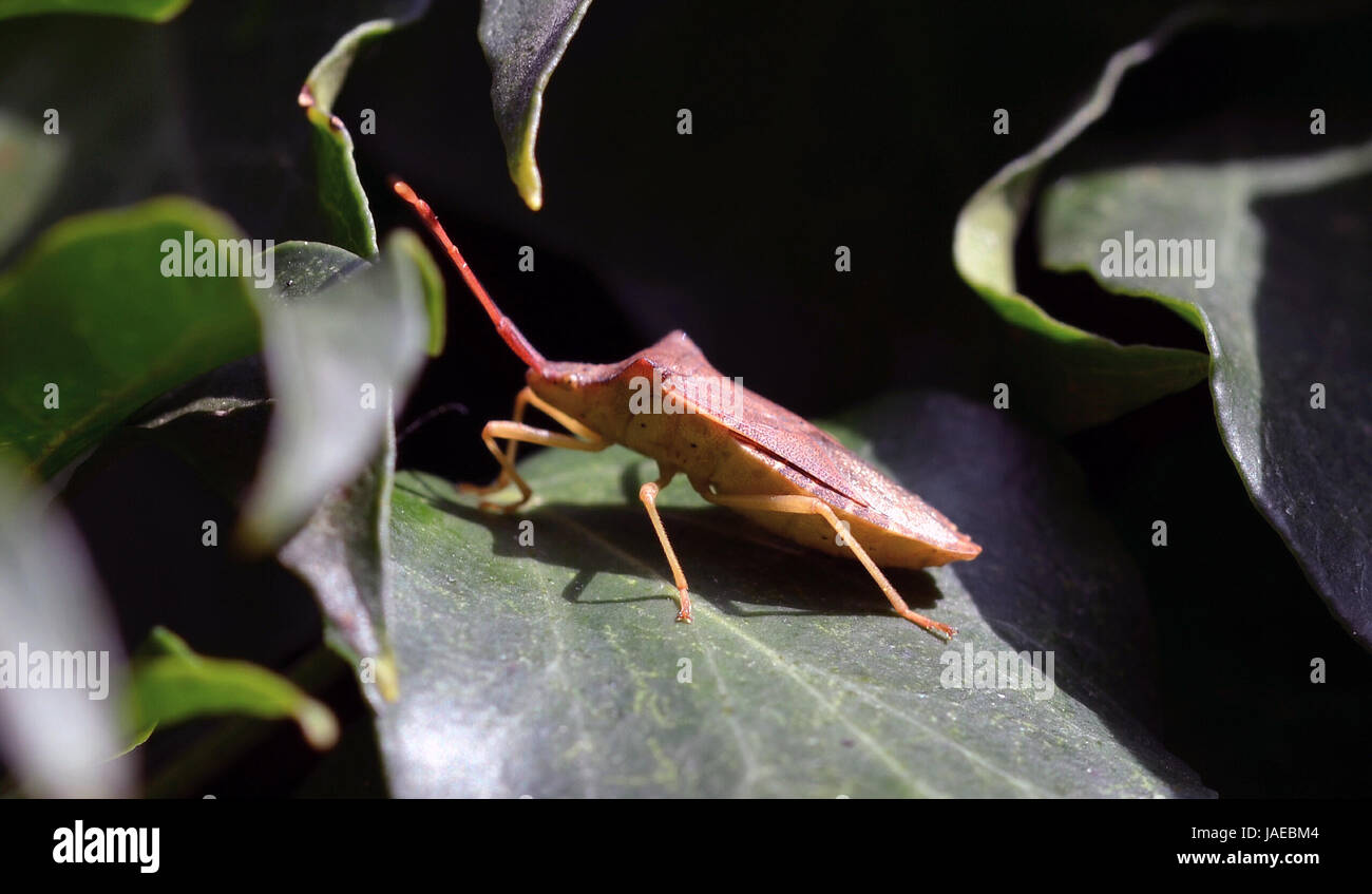 green brown Stock Photo