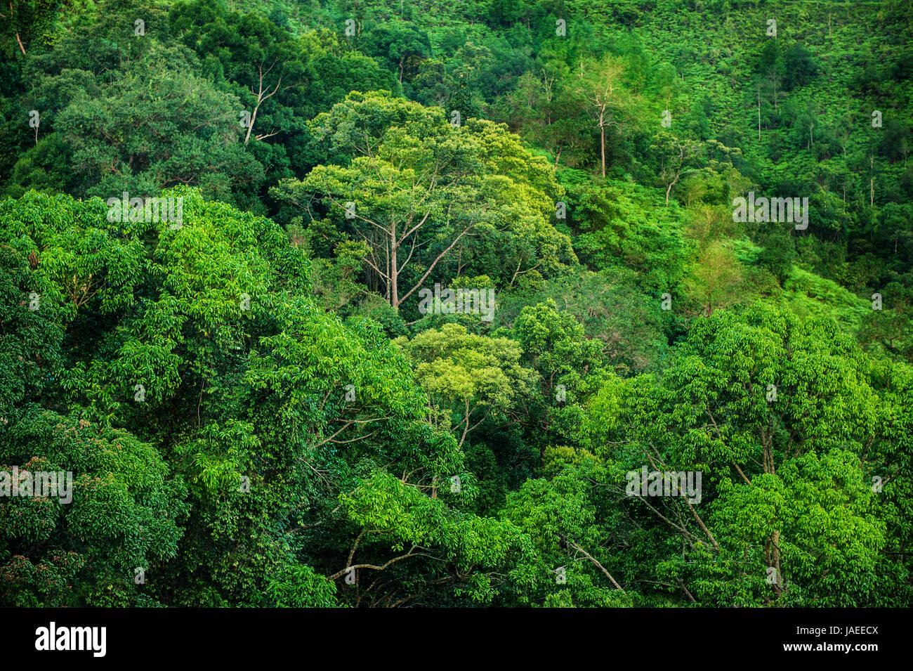 tropical green forest landscape view taman negara malaysia