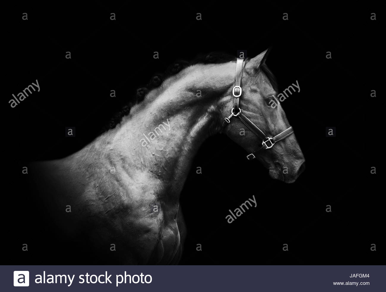sportive horse - Stock Image