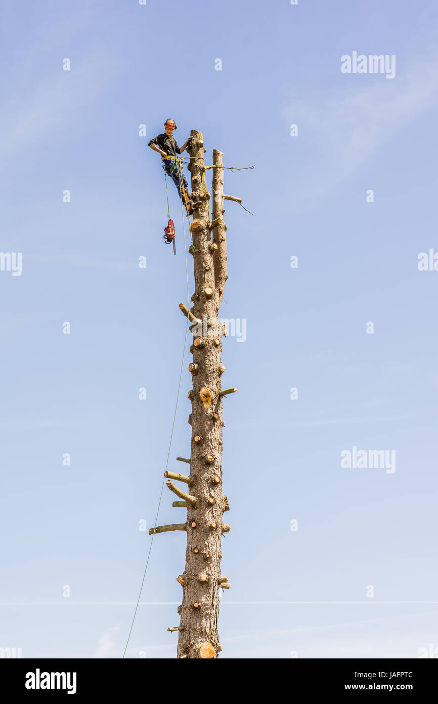 Arborist  working with a chainsaw in the top of a tree trunk, aginst blue sky. Jagerspris, Denmark - May 25, 2017 - Stock Image