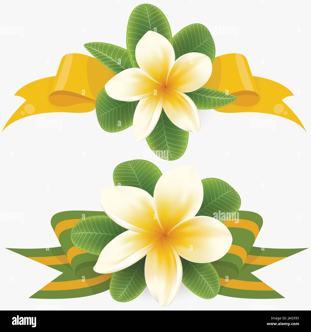 White and yellow Plumeria Flower - Stock Vector