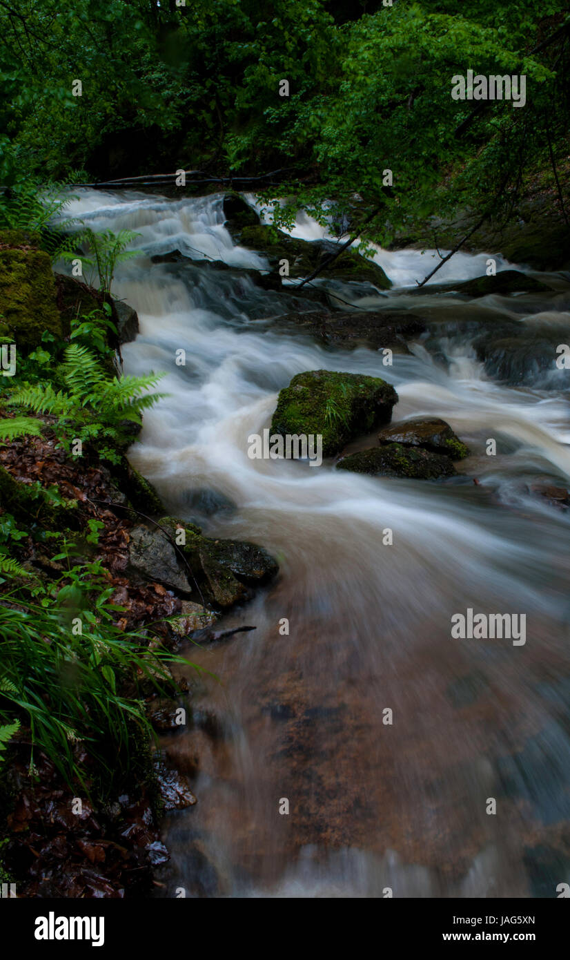 flowing stream in the forest - Stock Image